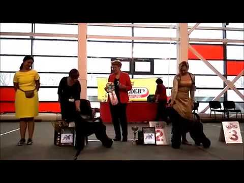 Kerry Blue Terrier Show, National Championship 2017 (part 4.Females & Competitions)