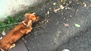 土佐犬のすぐそばを通る散歩コース。 土佐犬を通り過ぎると 次には中型...
