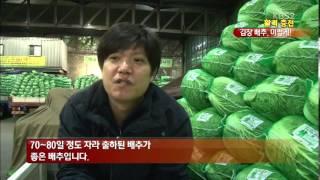[활력충전] 김장배추, 맛있게 절이기 간편 방법!