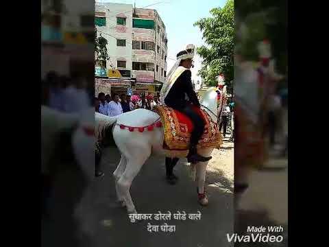 Sudhakar Dorle Ghode wale Horse Rent in Nagpur