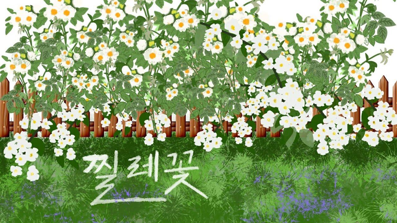 🍃 찔레꽃 - tenor 김호중