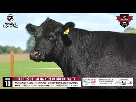 LOTE 10   TE2263 ALMA KOZI DA RIO DA PAZ TE - Prod Agência e TV El Campo