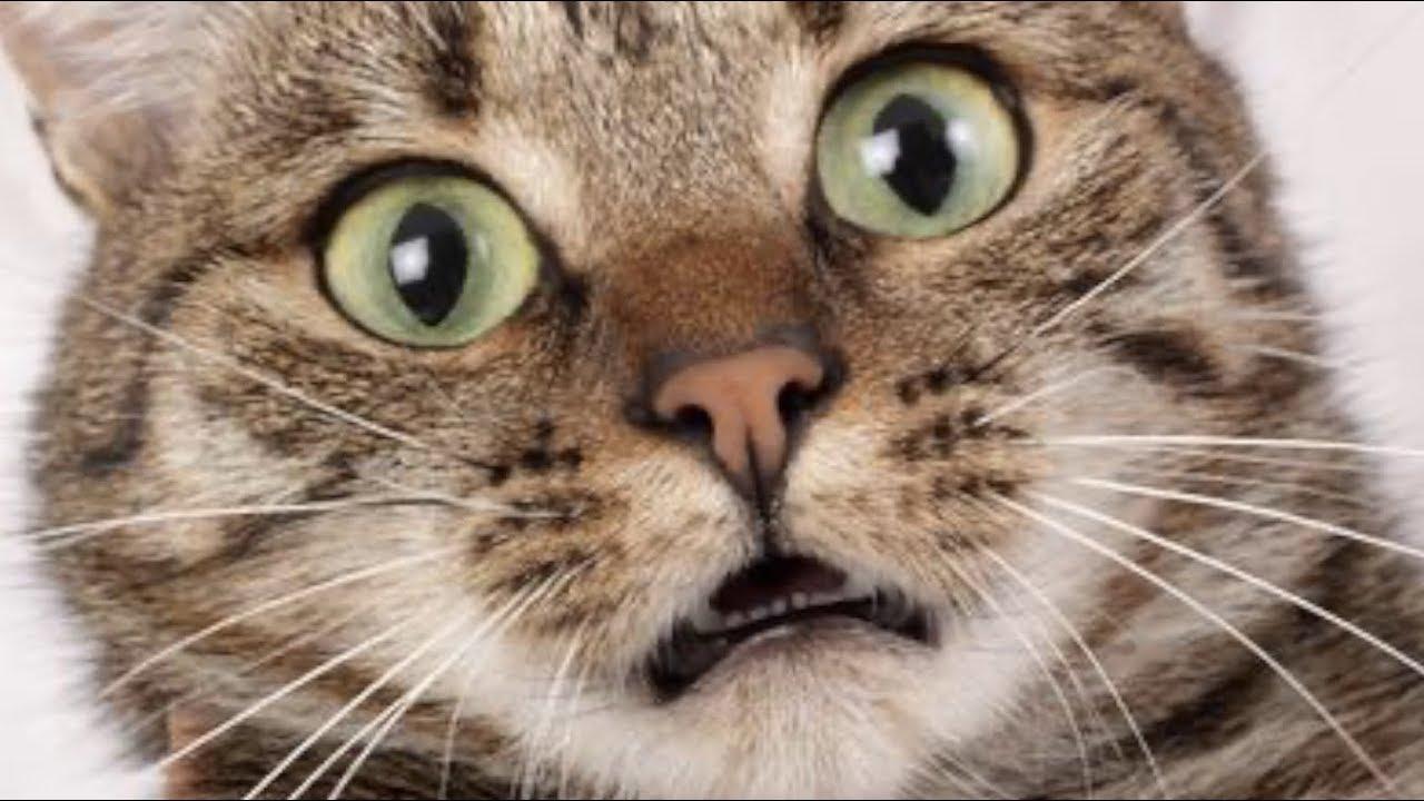 Download Qué Pasa Con Los Gatos I Mini documental