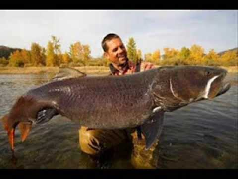 World's Biggest Monster Trout