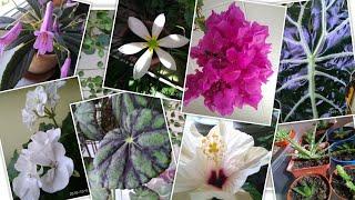 #цветы.Цветочные новости 5.10.18г.рассадила суккуленты🌵новые питомцы😉кому кактусы?