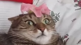 Funny Fail Compilation  - Funny cat -  Cats Being Jerks Video Compilation  - Reverse video