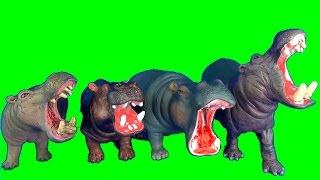 New Wild Animals Hippopotamus Elephant Fun Kids Toy Review