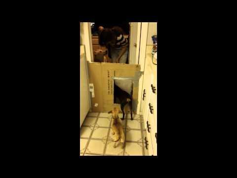 Dog Door Training & Height Test
