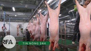 Tin nóng 24H | Việt Nam tiêu hủy 4.7 triệu con heo vì dịch tả lợn Châu Phi