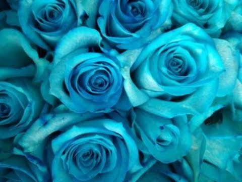 65d40e444 How To Make Blue, Green and Purple Roses - YouTube