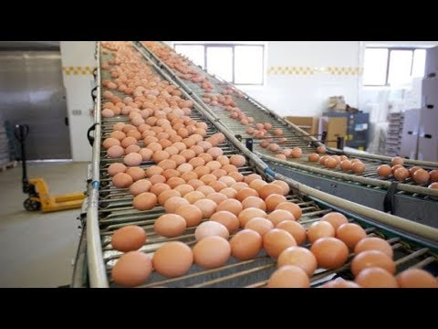Unkown Facts Of Egg Industry That Will Shock You|amazing Fact of Egg Industry|Hindi/Urdu|PointPayPK