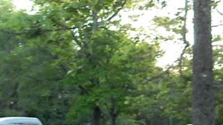 美笛キャンプ場ではこの時期(6月頃)、敷地内にあるポプラの木より大量...