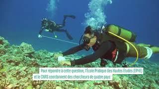 Réchauffement climatique, quels impacts pour les récifs coralliens ?