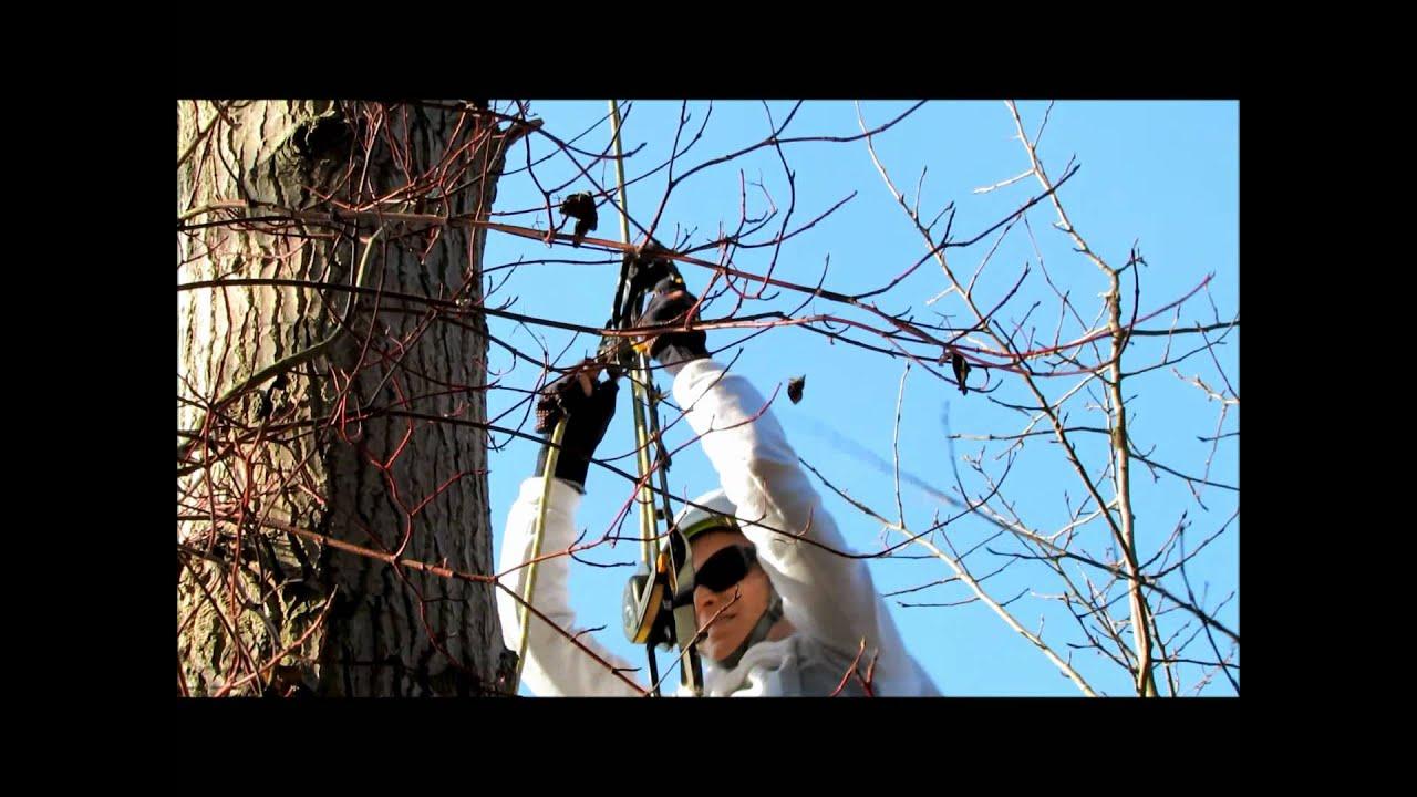 Klettergurt Baum : Geocaching t baum eschborn youtube