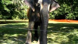 Roxy the Elephant
