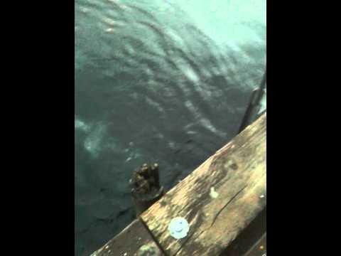 Seattle Dive :)