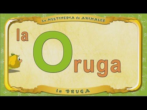 Multipedia de los animales -  Letra O - la Oruga