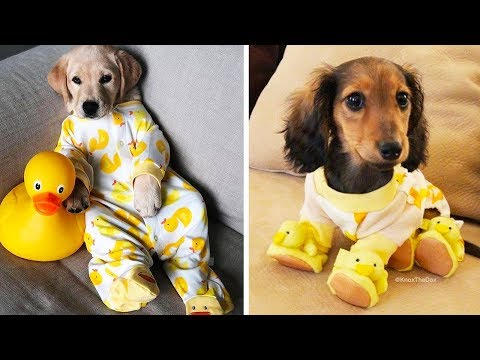 ♥Cute Puppies Doing Funny Things 2020♥ #25 Cutest Dogs | Cutest Puppies City