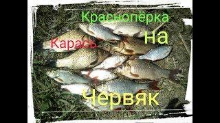 Нашел канаву а там КАРАСЬ и КРАСНОПЕР.Ловля на поплавчанку.Рыбалка на Карася и Краснопера.
