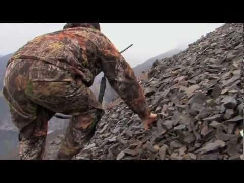Alaska Dall Sheep Hunting