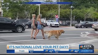 Thursday Is National Love Your Pet Day