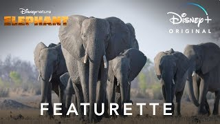 Disneynature's Elephant | Featurette | Disney+