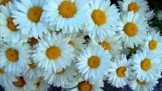Beautiful Blooms 114 (