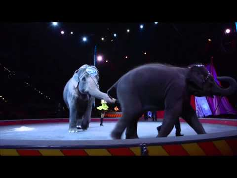 Andre McClain on the Ringling Bros. Center for Elephant Conservation