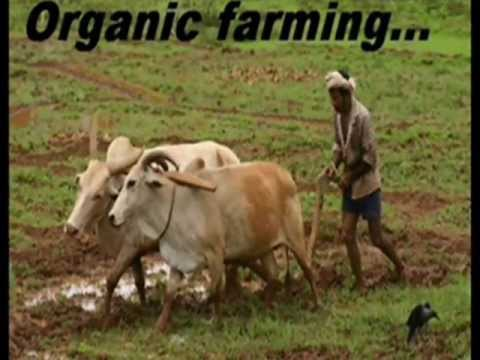 Rajiv dixit's best formula for ORGANIC FARMING.It can save 5 lakh crore every year of BHARAT!!
