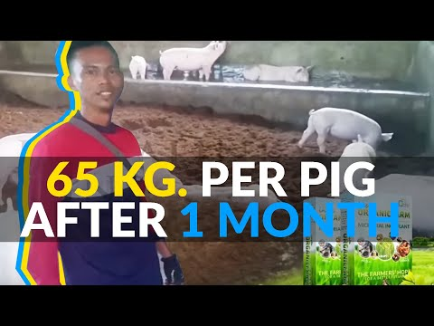 Pig farm of Rogelio Gonzales from Leet, Santa Barbara, Pangasinan