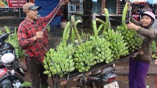 Tin Tức 24h : Giá chuối giảm kỷ lục ở Quảng Trị khiến nông dân lao đao