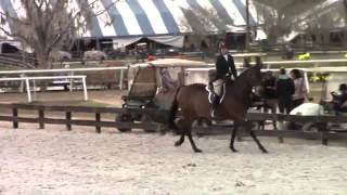 Video of Got To Be ridden by Jackie Arakelian from ShowNet!