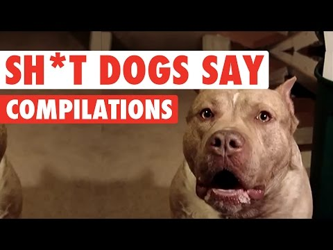 Sh*t Dogs Say Funny Pet Video Compilation 2016