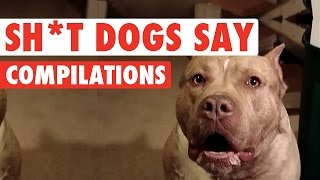 sh t dogs say funny pet video compilation 2016