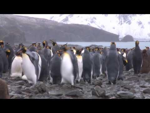 Elysium Epic - Shackleton Antarctic Visual Epic:part 6- Penguin Serenade
