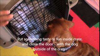 Crate Training Tip - Make Your Dog Beg To Be Let In His/her Crate