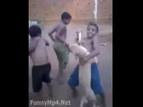 Free Download WhatsApp Video Village Boys Dancing With Dog  Very Funny