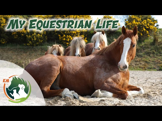 My Equestrian Life - Update on Oisin & all the other animals!