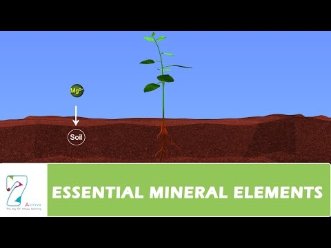 ESSENTIAL MINERAL ELEMENTS_PART 05
