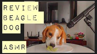 ASMR Dog Reviews   Dog Taste Test   Pet lover 🐶