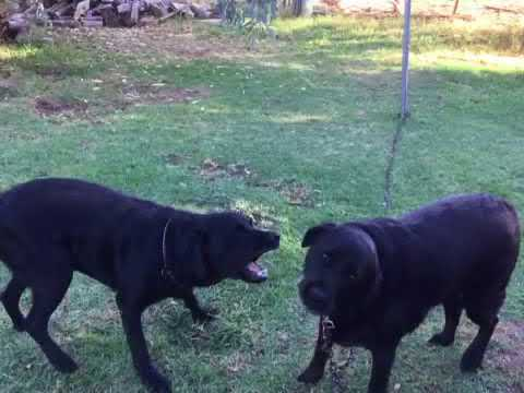 My Dogs (Buzz and Cindy)