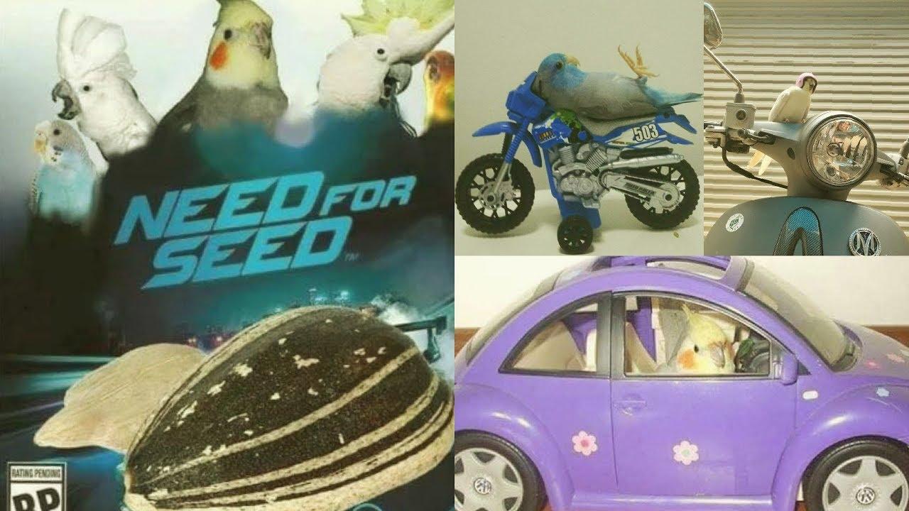 NEED FOR SEED | NFS BIRBS EDITION | Happy Cockatiels | Cockatiel Funny Videos