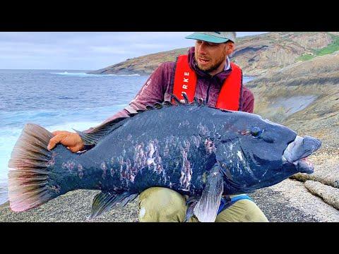 HUGE GROPER | FISHING A REMOTE ISLAND