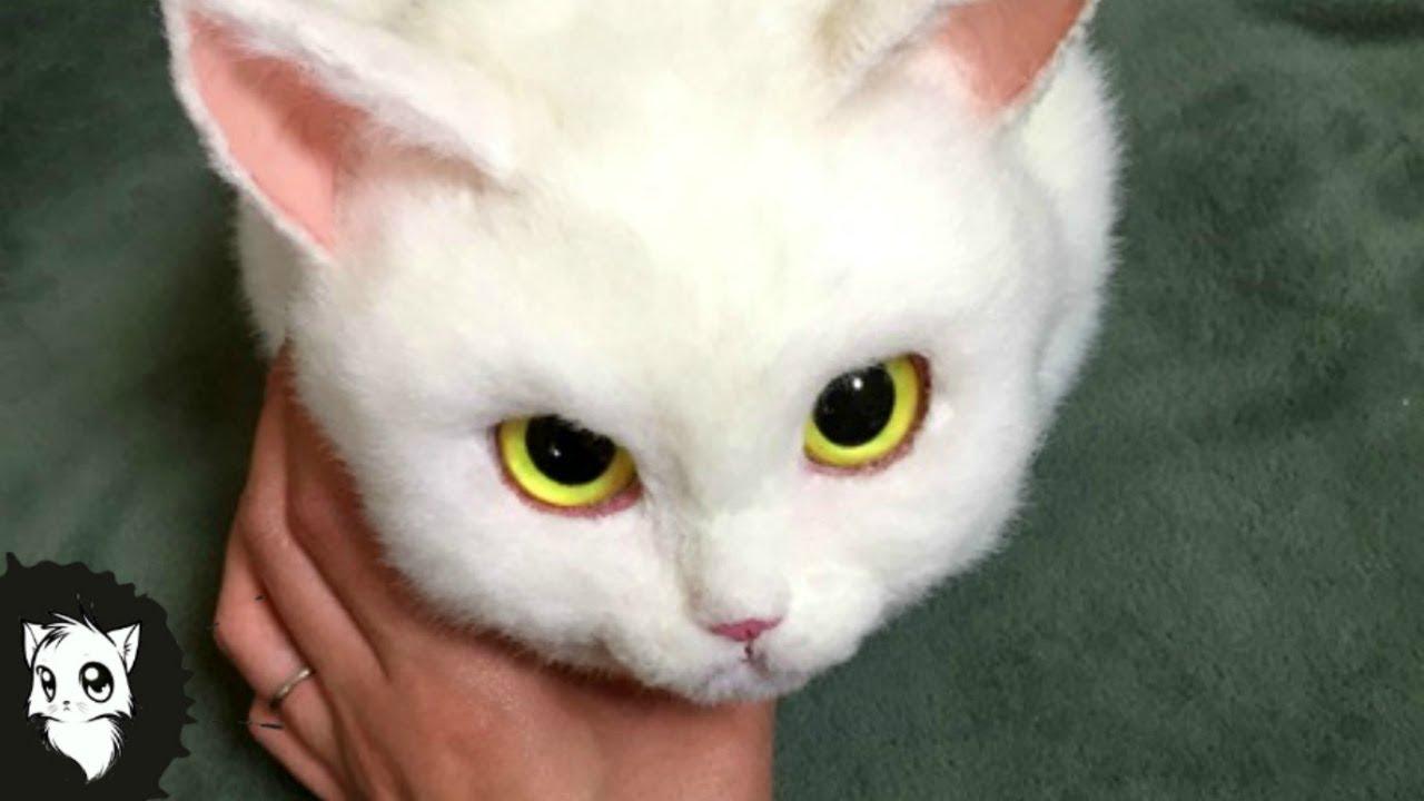 Ютуб кот черный с белым