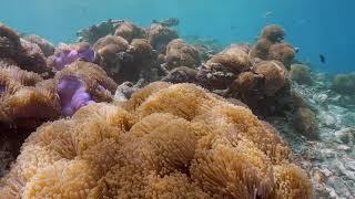 Kandolhu Maldives - When Will You Visit?