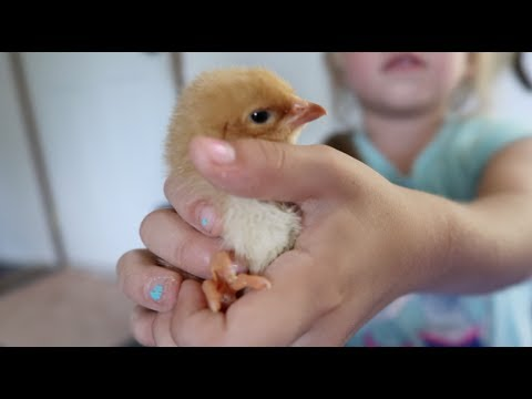 are-we-ready-for-more-chickens?