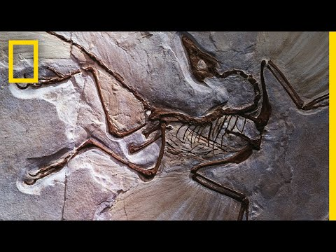 Fossils 101 | National Geographic