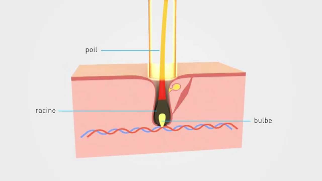 epilium epilation laser principe et explication youtube. Black Bedroom Furniture Sets. Home Design Ideas
