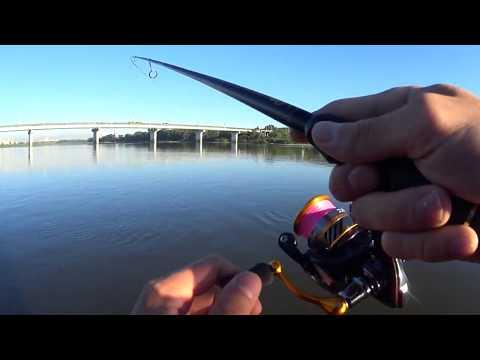 Вопрос: Что за рыба в реке Томь, похожая на угря?