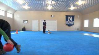 Zero (siberian Husky) Puppy Camp Training Video